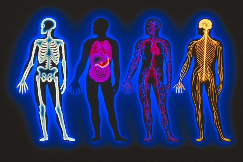 Human Body Systems Welcome To W105